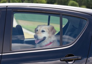 Top 10 Dog-Friendly Vehicles