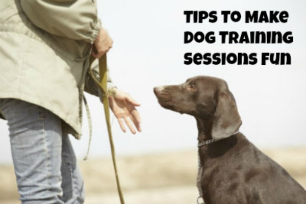 How To Make Dog Training More Fun