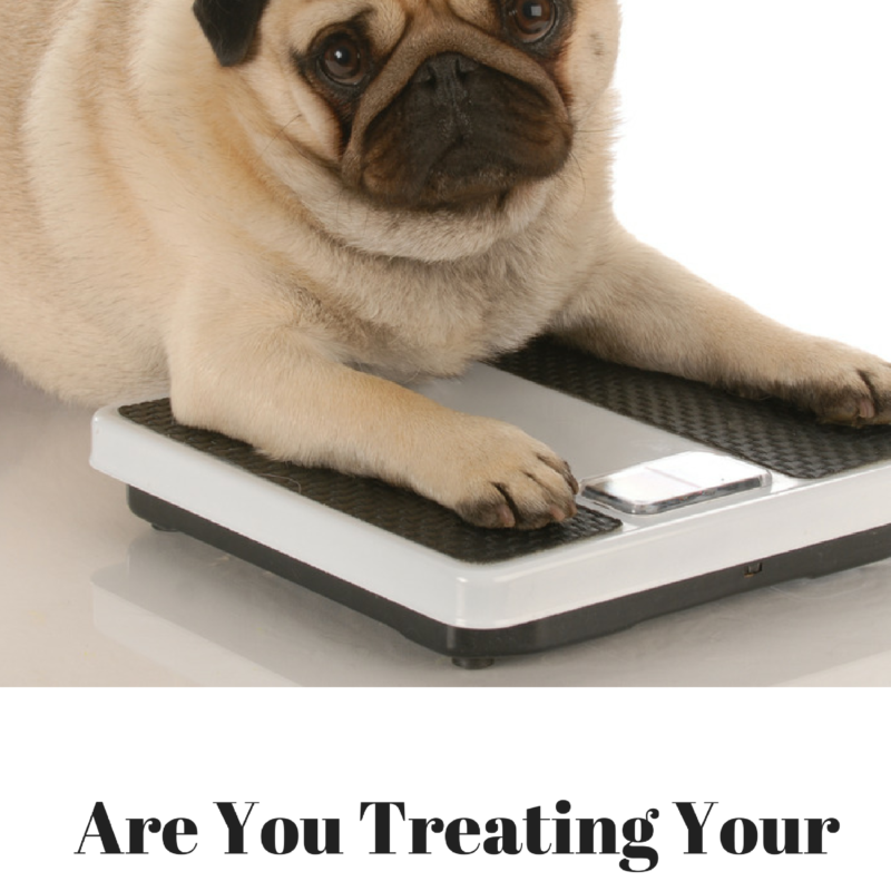 "Are You ""Treating"" Your Dog to Obesity?"
