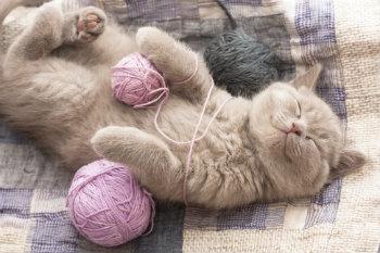 cat lifestyle 2_