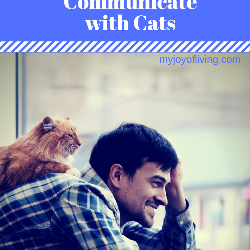 How to Communicate With Cats: No ESP required!
