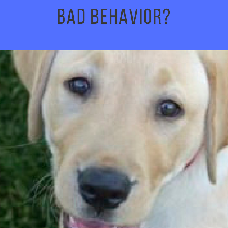 Are You Reinforcing The Wrong Behavior With Your Dog?