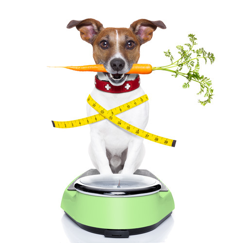 Does Your Pet Need to Lose a Few Pounds?