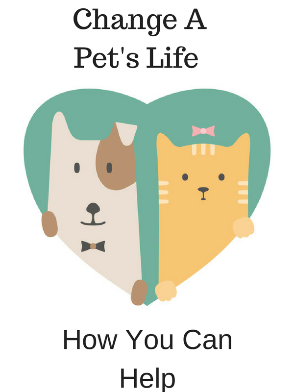Change A Pet's Life Day: How You Can Help